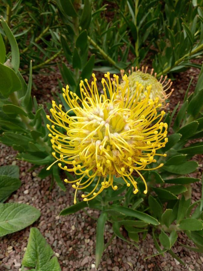 Singapur ogród botaniczny zdjęcie royalty free