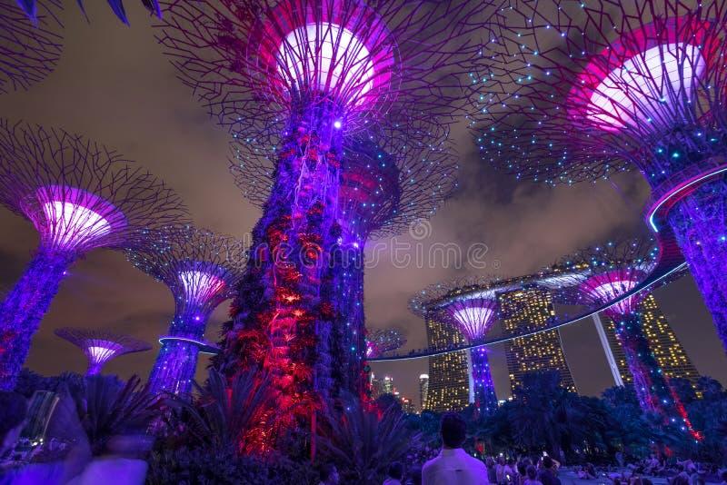 Singapur Supertree Grove lizenzfreie stockfotos