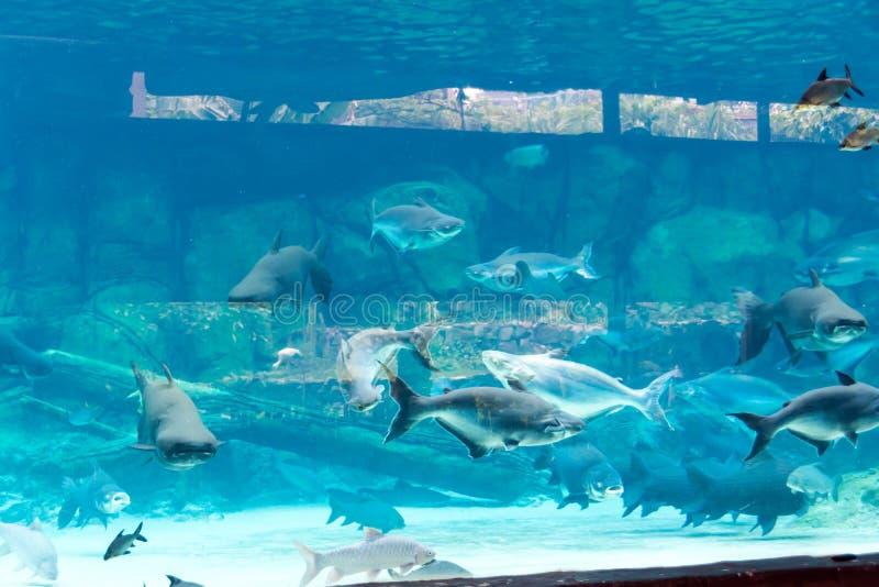 Singapur underwarer Denny akwarium Sentosa, Singapur, Kwiecień 14, zdjęcia royalty free