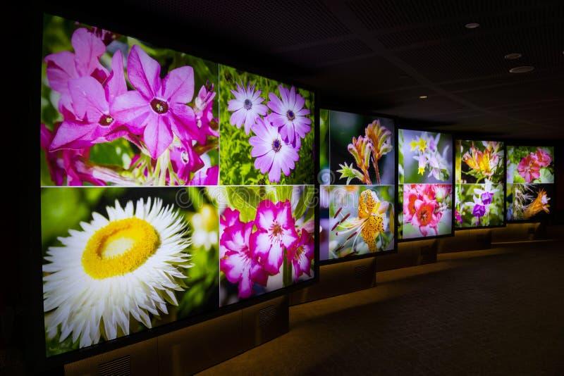Singapura - 14 de outubro de 2018: as flores conduzem visitantes na abóbada da flor imagem de stock royalty free