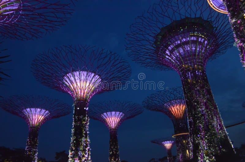 Singapura opinião da noite do 26 de julho do bosque de Supertree em jardins imagem de stock royalty free