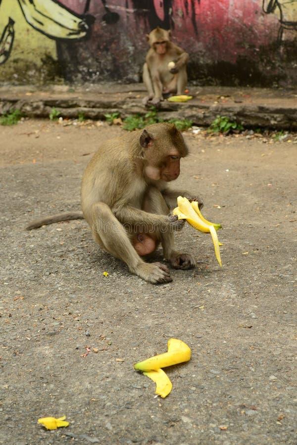 Singe avec la banane image stock