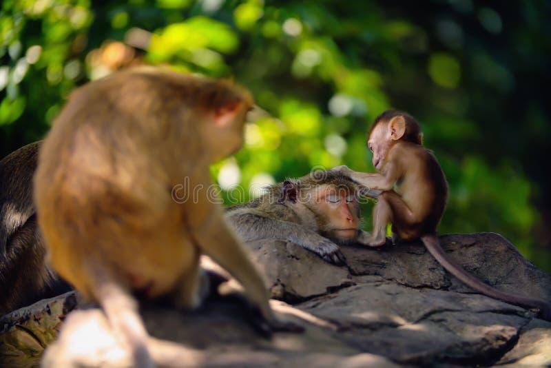 Singe de bébé et mère de singe photo stock