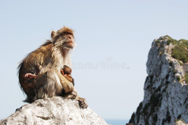 Singe de mère avec la chéri sur la roche chez le Gibraltar photographie stock libre de droits