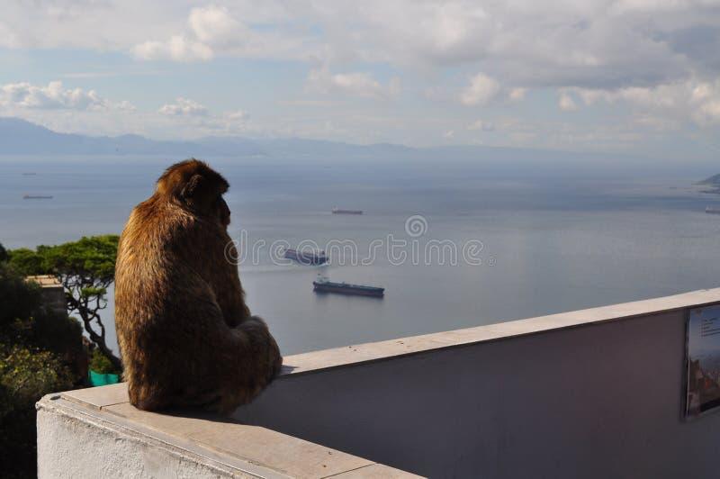 Singe de Macaque sur le rocher de Gibraltar, Gibraltar, l'Europe photographie stock libre de droits