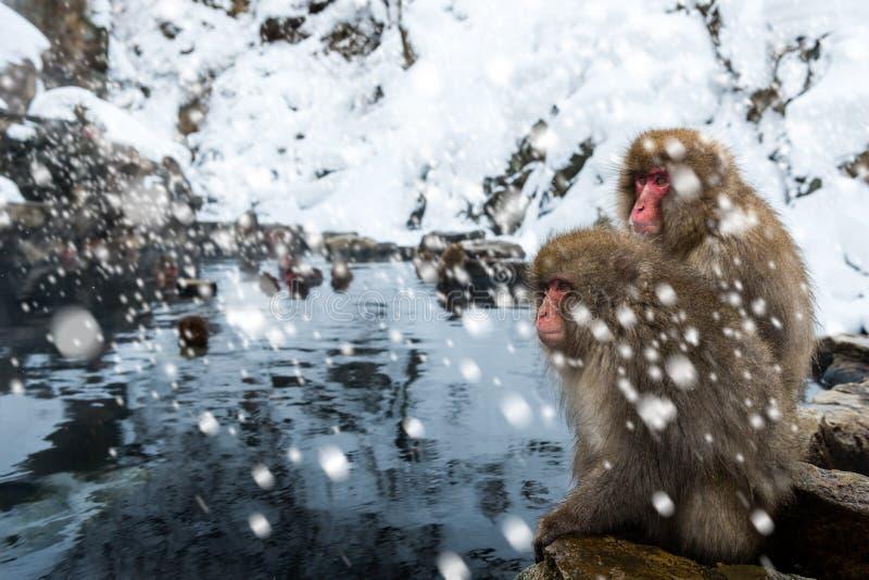 Singe de neige image libre de droits