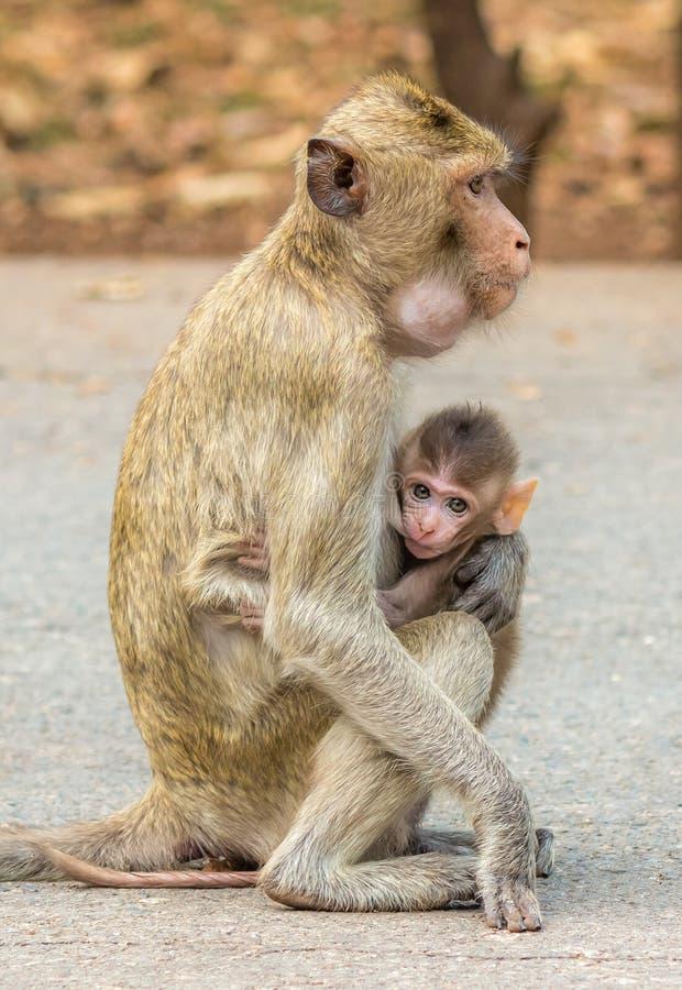 Singe et maman de bébé photographie stock libre de droits