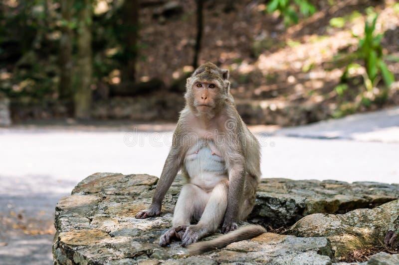 Singe mignon. Assis dans la jungle et regardant loin photo libre de droits