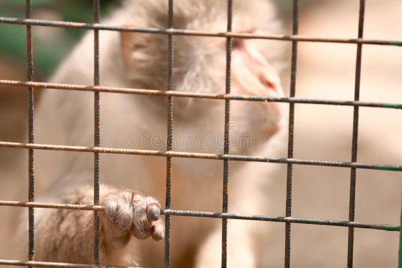 Singe mignon dans le jardin zoologique photo libre de droits