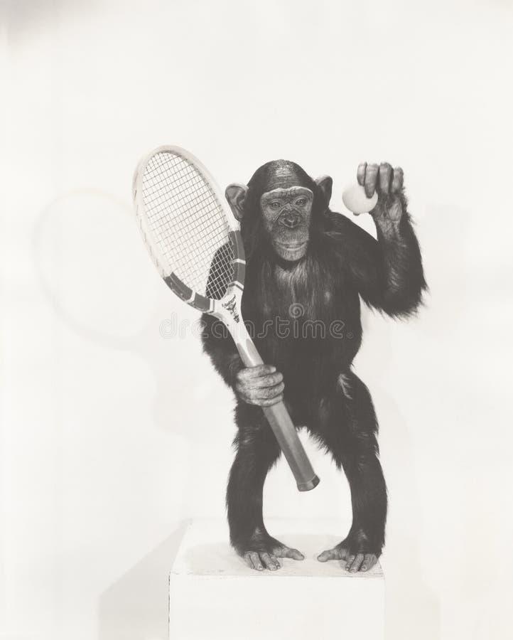 Singe tenant une raquette et une boule de tennis photographie stock