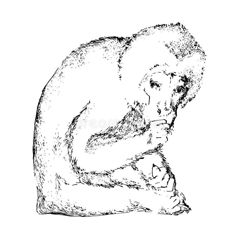 Singe tiré par la main Image noire d'animal de vecteur Type de croquis illustration libre de droits