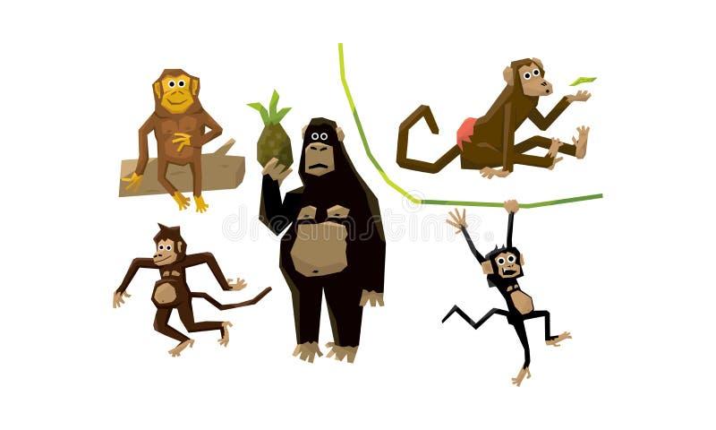 Singes drôles de diverses races, caractères animaux mangeant des fruits et accrochant sur l'illustration de vecteur de vignes illustration libre de droits
