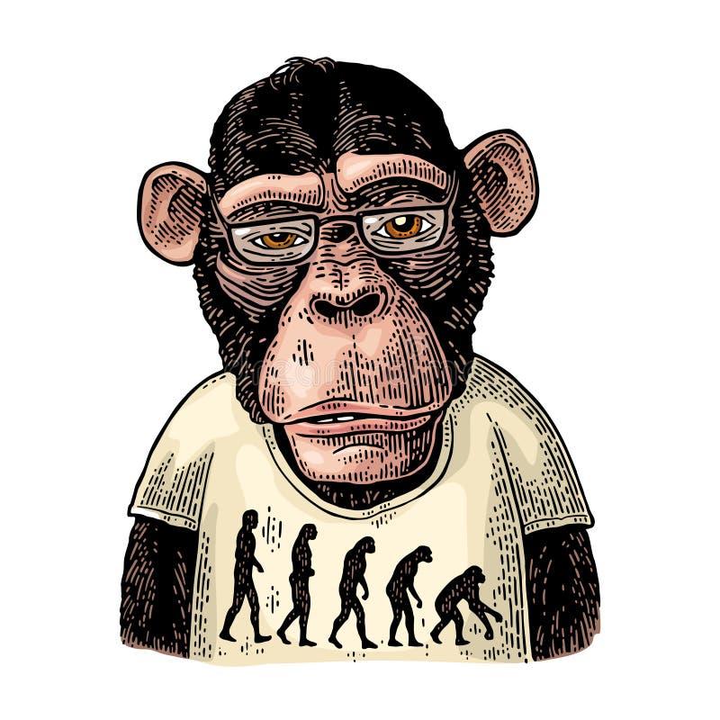 Singes habillés dans un T-shirt avec la théorie de l'évolution au contraire illustration de vecteur
