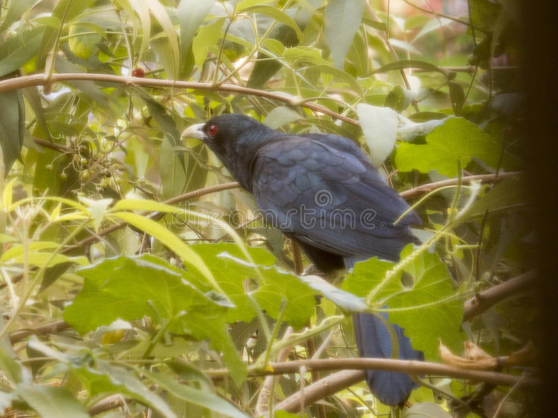 Singing bird royalty free stock photos