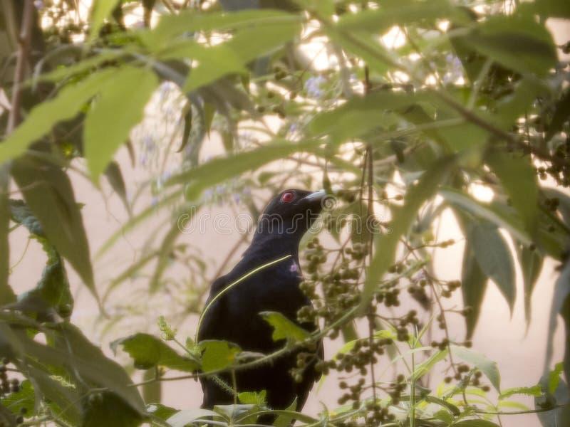 Singing bird royalty free stock photography