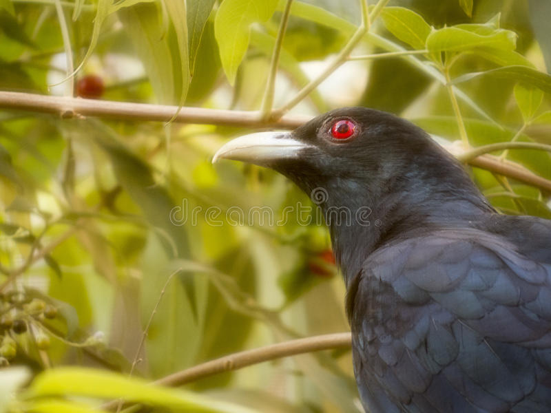 Singing bird stock photo