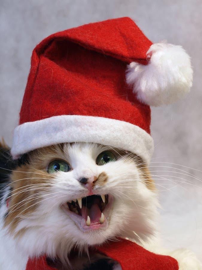Singing christmas cat. In red cap stock image