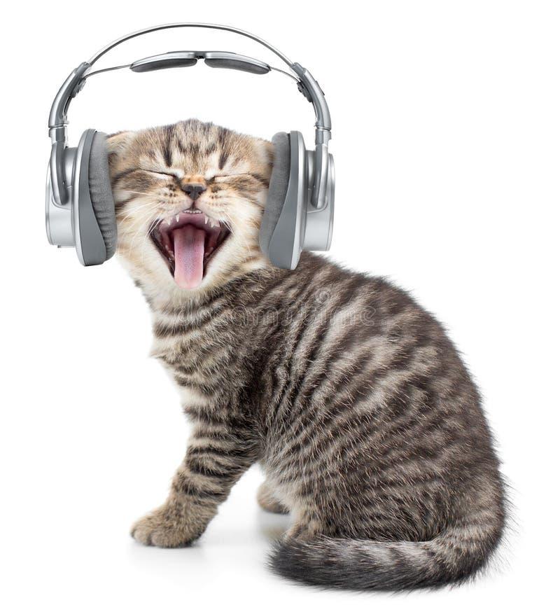 Singing funny cat or kitten in headphones stock images