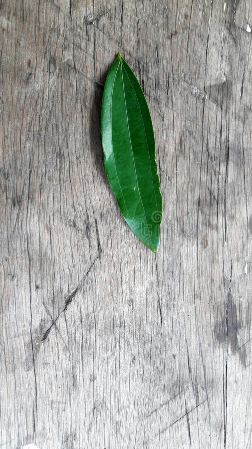 A single acacia leaf on a rustic wooden background. A cycle of an acacia leaf shapes like star stock photography