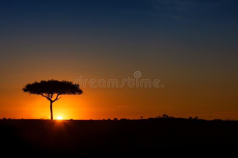 Single Acacia Tree on Horizon at Colorful Sunset stock photography