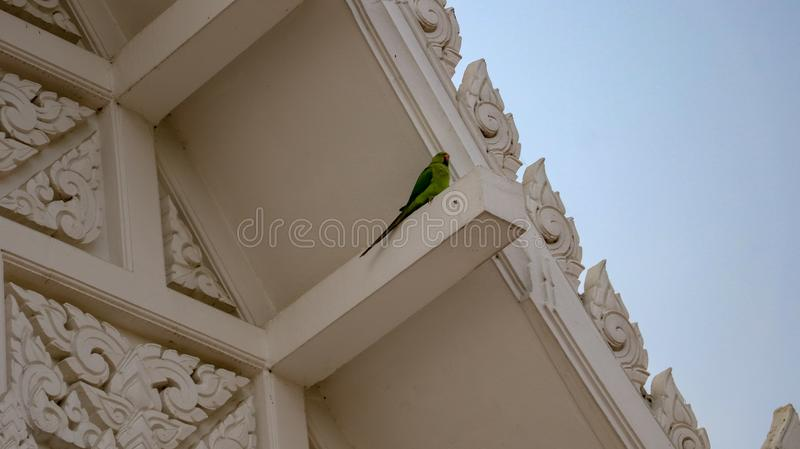 Single alone parrot. Parrot sitting on the roof of Royal Thai Monastery in Lumbini, Nepal royalty free stock photography