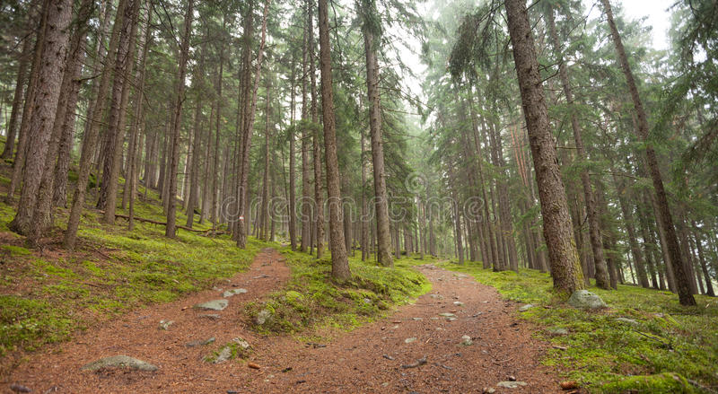 A single alpine path splits in two different directions. It`s an. Autumnal cloudy day stock photography