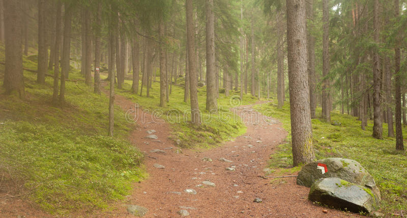 A single alpine path splits in two different directions. It`s an. Autumnal cloudy day royalty free stock photo