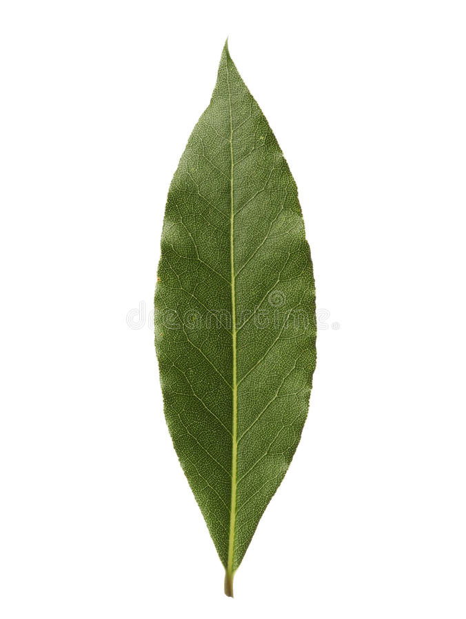 Free Single Bay Leaf Isolated On White Background Royalty Free Stock Image - 29388586