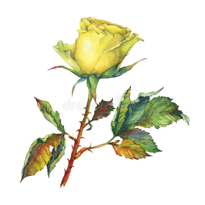 A single of beautiful golden yellow rose with green leaves. stock illustration