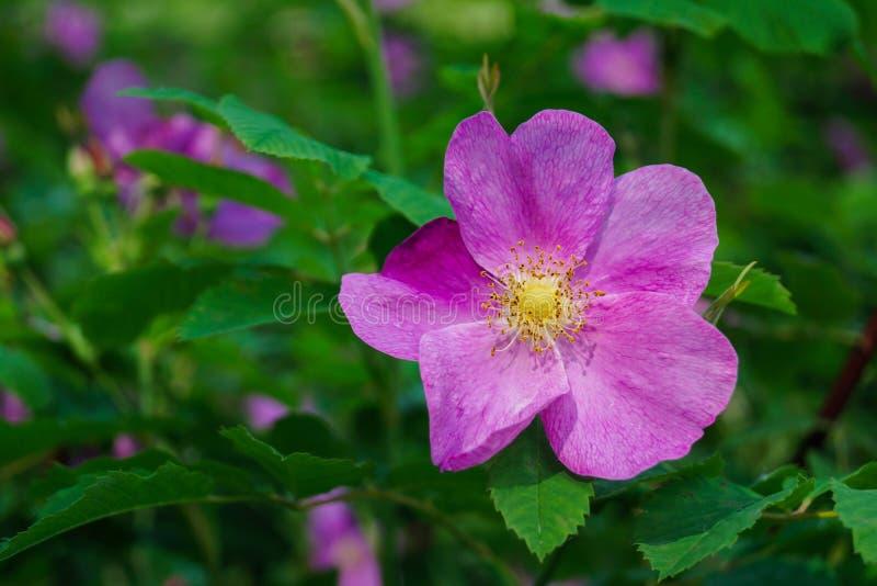Single beautifull Flower. Summer park.  Single beautifull Flower close up royalty free stock photos