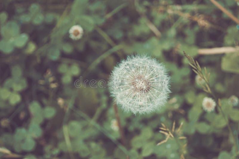 Single beautifull Flower. Summer park.  Single beautifull Flower close up royalty free stock images