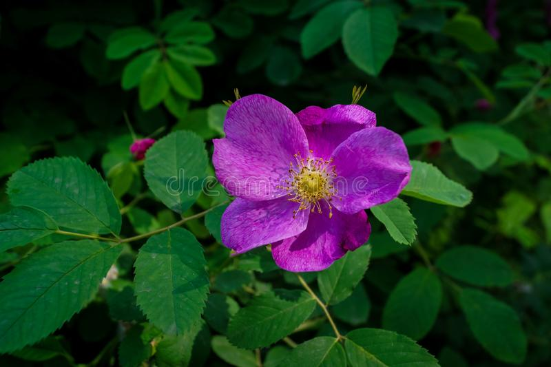 Single beautifull Flower. Summer park.  Single beautifull Flower close up stock image