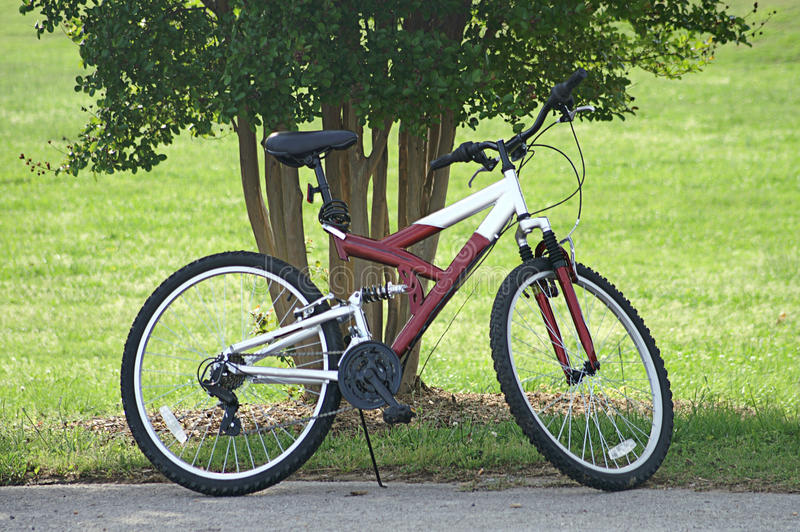 Single Bike Parked By Tree. A single red and white bike parked by trees royalty free stock image