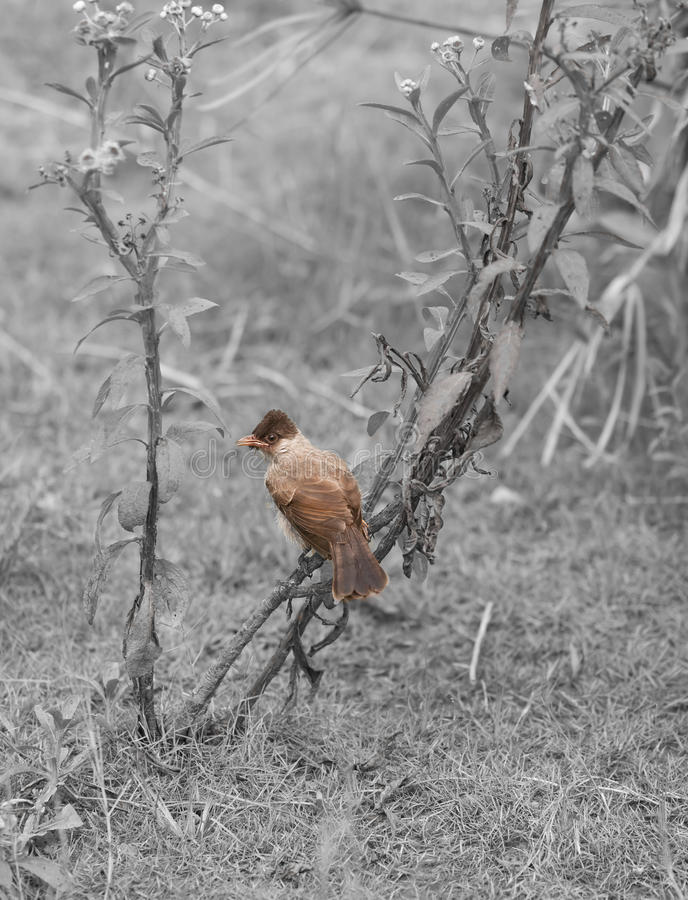 Download Single bird stock image. Image of feathered, environment - 26008461