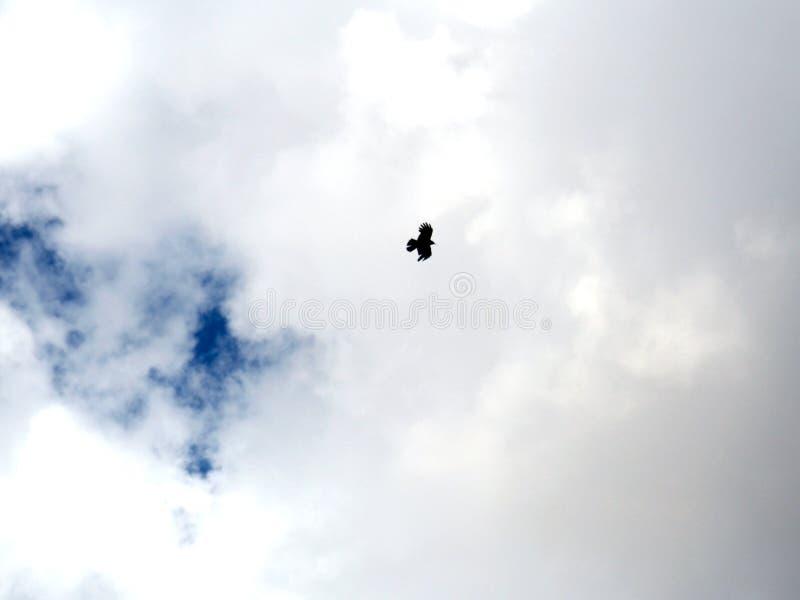 Single bird flying The cloudy sky. A single bird flying The cloudy sky royalty free stock photography