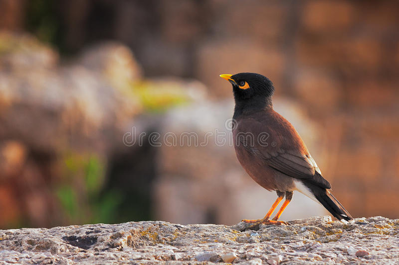 Single Bird Sitting On The Wall Stock Image