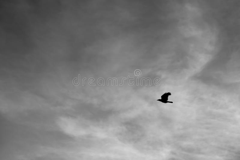 Single Bird In The Sky stock image