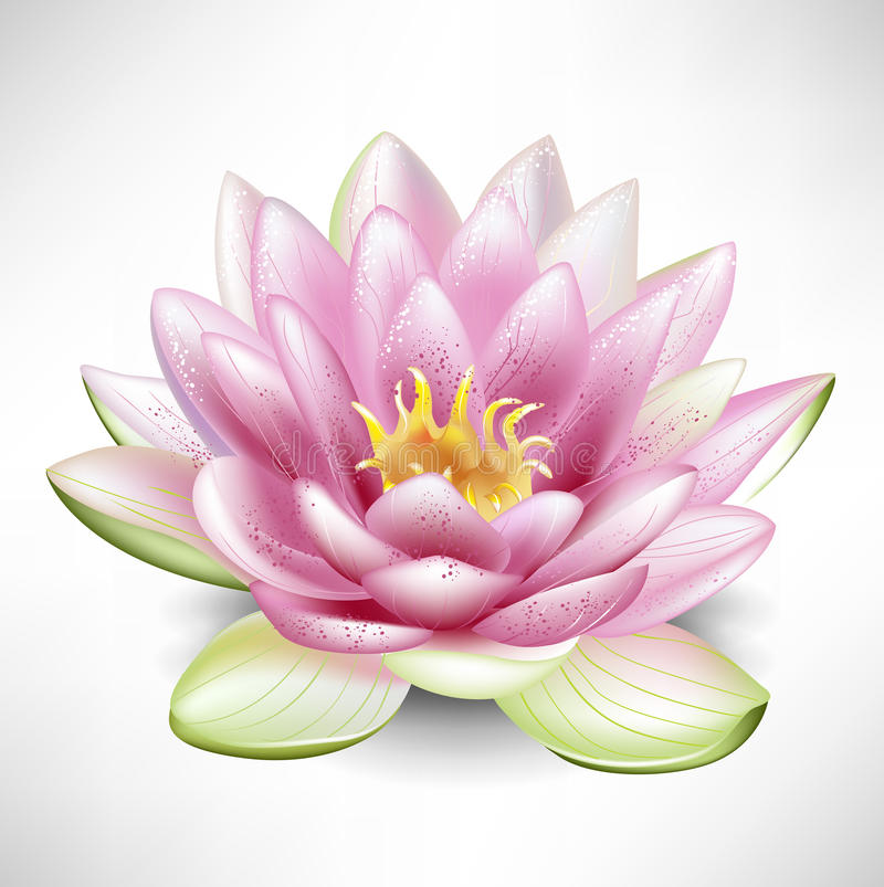 Single Blossoming Lotus Flower Stock Vector - Illustration ...