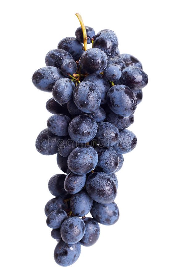 Single blue grape cluster royalty free stock image