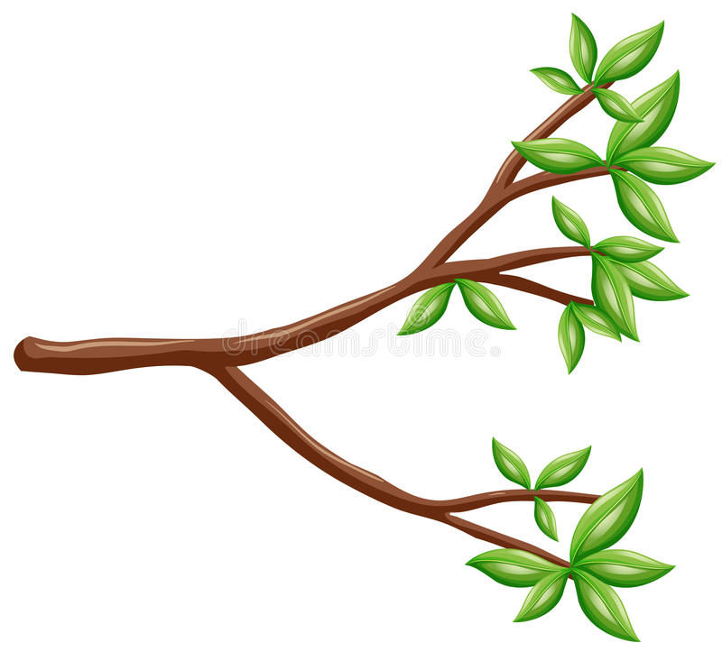 Single branch with green leaves vector illustration