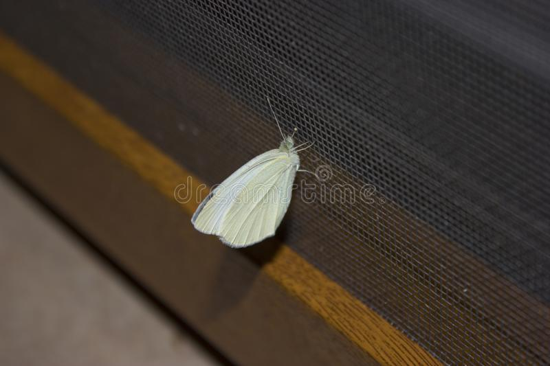 Single butterfly on a fly wire stock photos