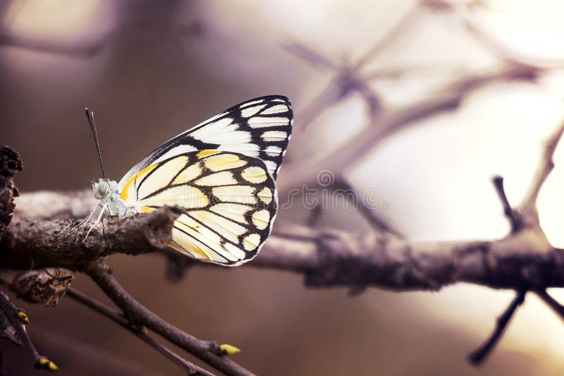 Single butterfly sitting on a branch royalty free stock photo