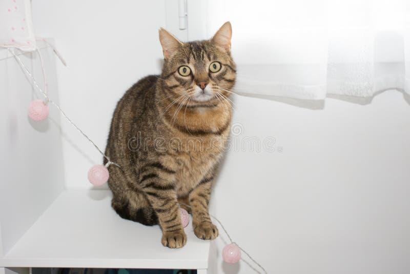 Single cat at home seat near window. Portrait of a single cat at home seat near window royalty free stock photo