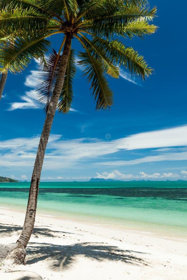 Single coconut palm on a white sand beach stock photos