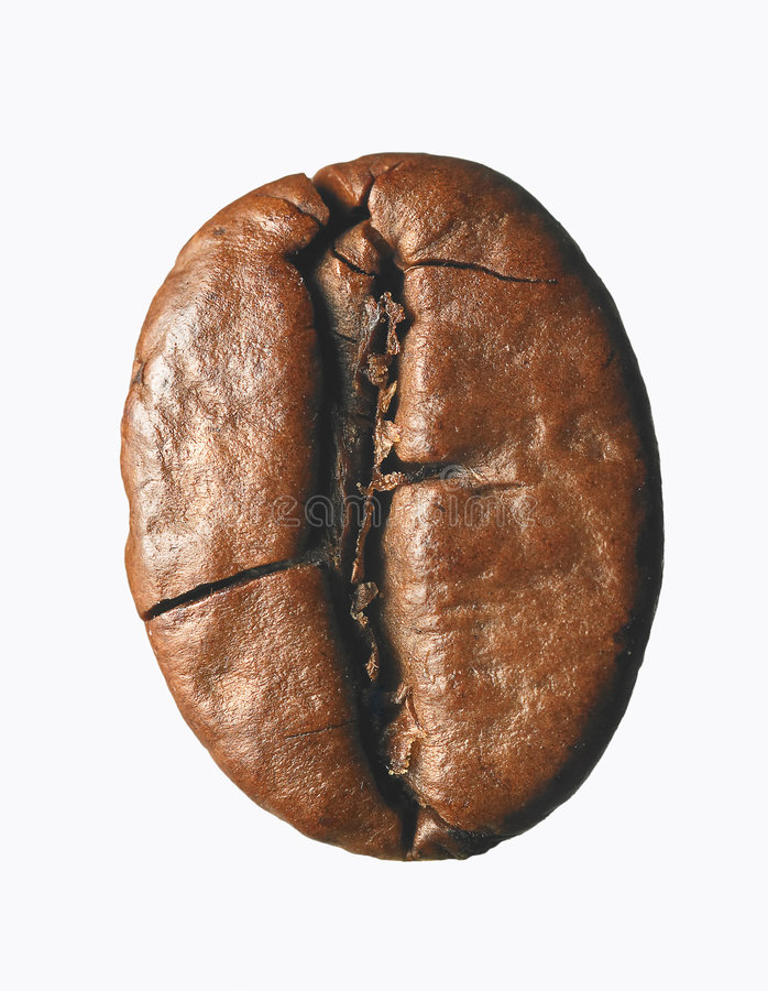 Single coffee bean royalty free stock photography