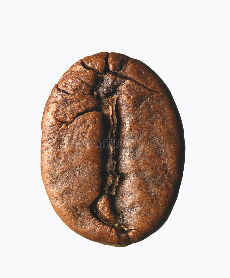 Free Single Coffee Bean Royalty Free Stock Image - 5262956
