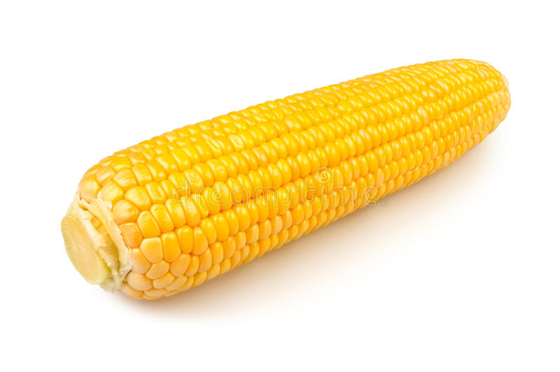 Download Single corn stock image. Image of healthy, sweet, white - 26272943