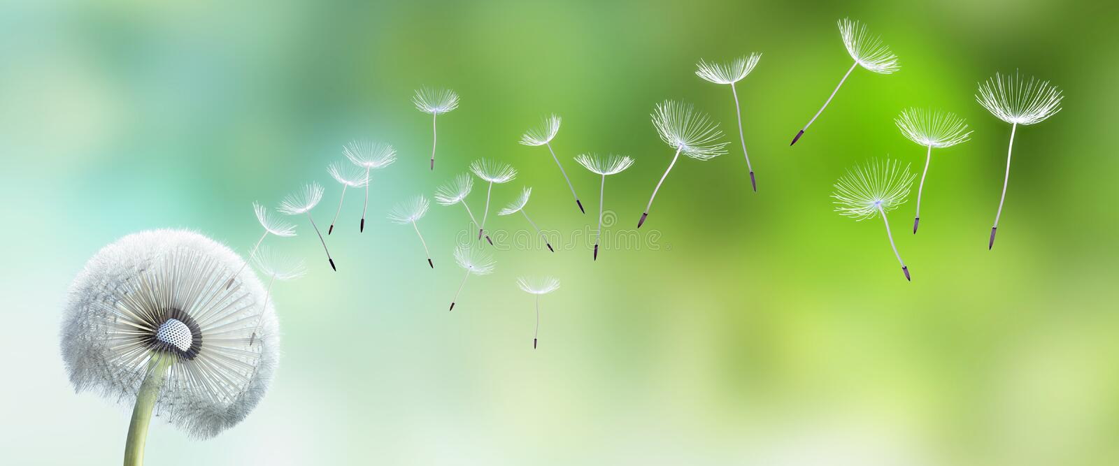 Single dandelion with seeds flying away royalty free illustration