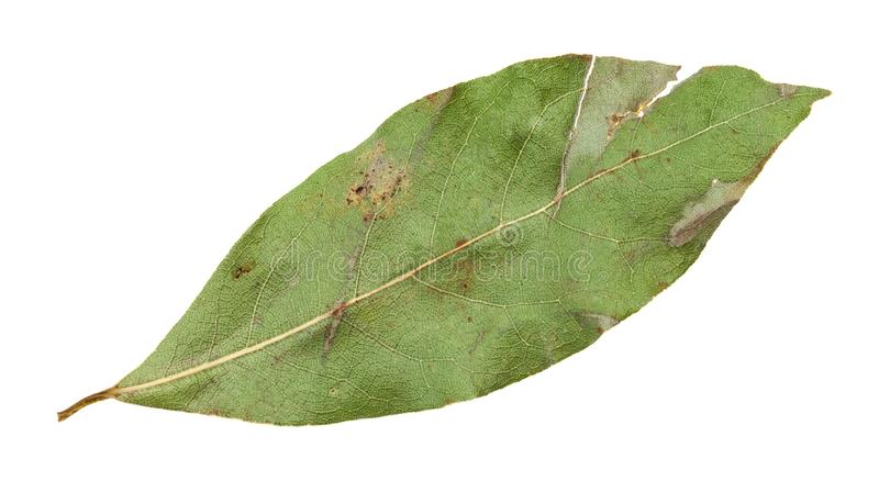 single dried bay leaf isolated on white royalty free stock photography