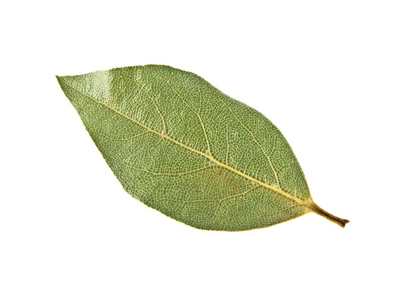 Single dried bay leaf isolated on white background royalty free stock photo